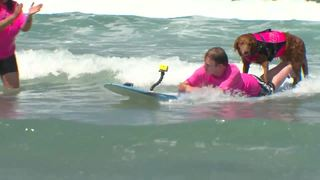 Surfing dog, quadriplegic surfer reunite