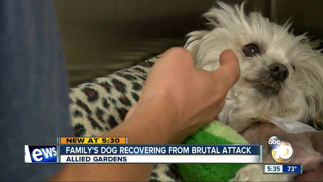 Small dog mauled at park in Allied Gardens