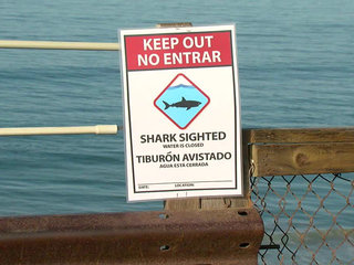 Experts: Shark that attacked boy was great white