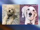 Families want dogs returned by new owners